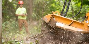 Tree Stump Grinding Lexington